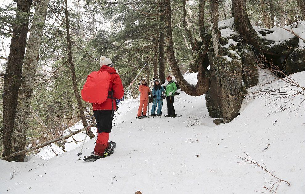 Snowshoe hiking private guide in Shiga Kogen