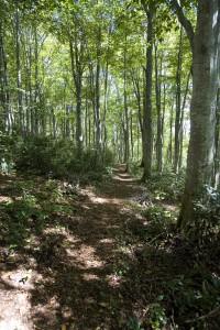 袴岳のブナの森